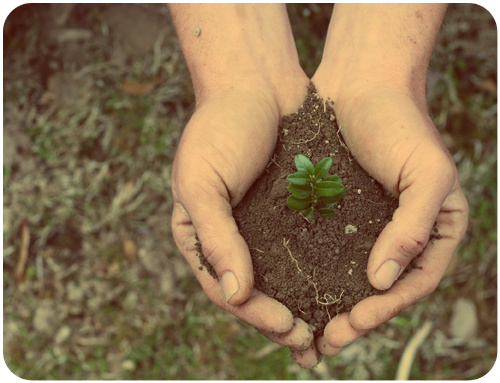 How God Uses Stress in Our Lives / Plant growing in dirt