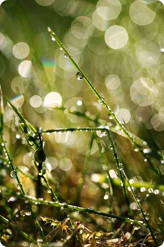 God's Immutability / Light in Grass