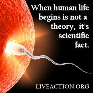 When human life begins