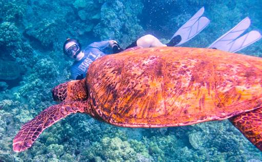 Randy with turtle