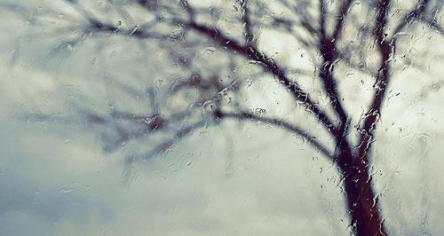 Tree through Window
